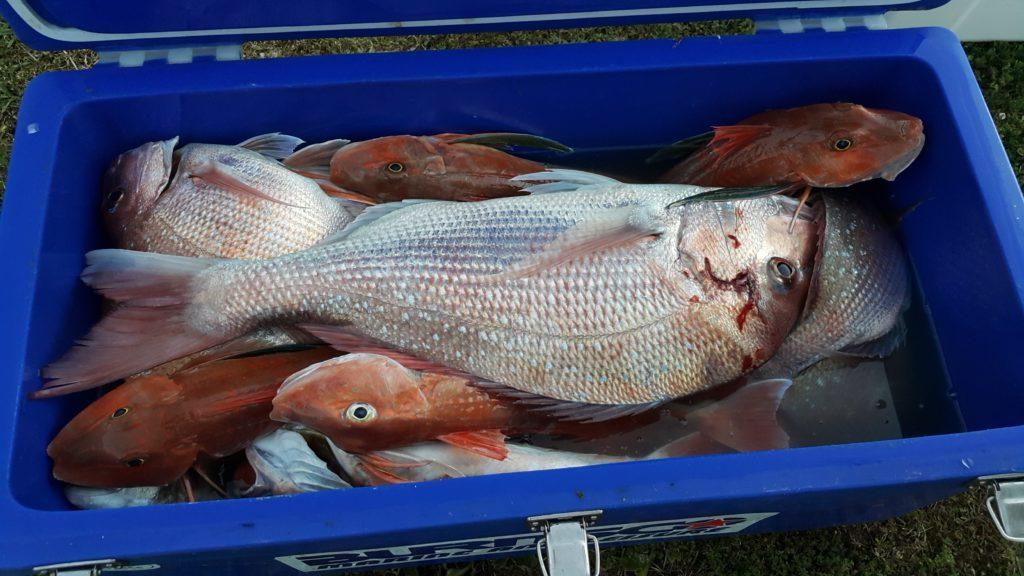 ニュージーランド ラグラン船釣り 鯛とほうぼう