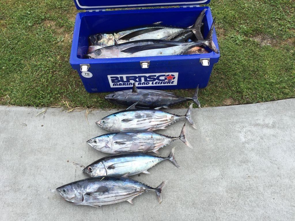 ニュージーランド ラグラン船釣り トロ―リング かつお大漁