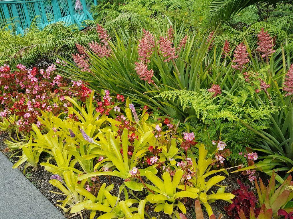 ハミルトンガーデン 亜熱帯ガーデン