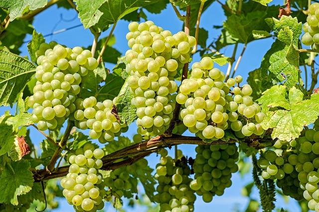 ニュージーランド 白ワイン