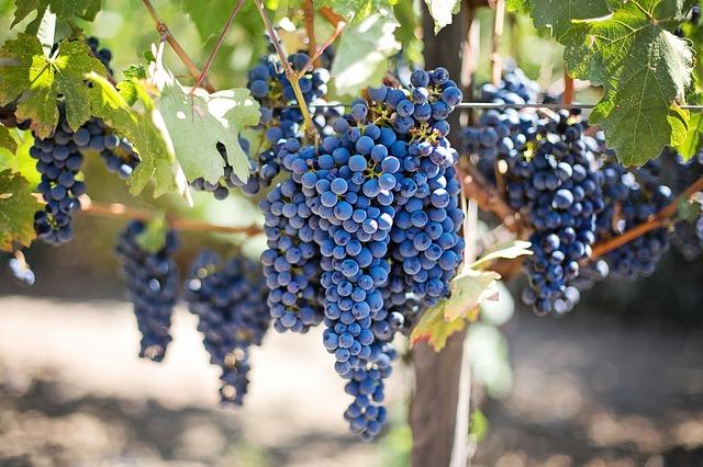 ニュージーランド 赤ワイン