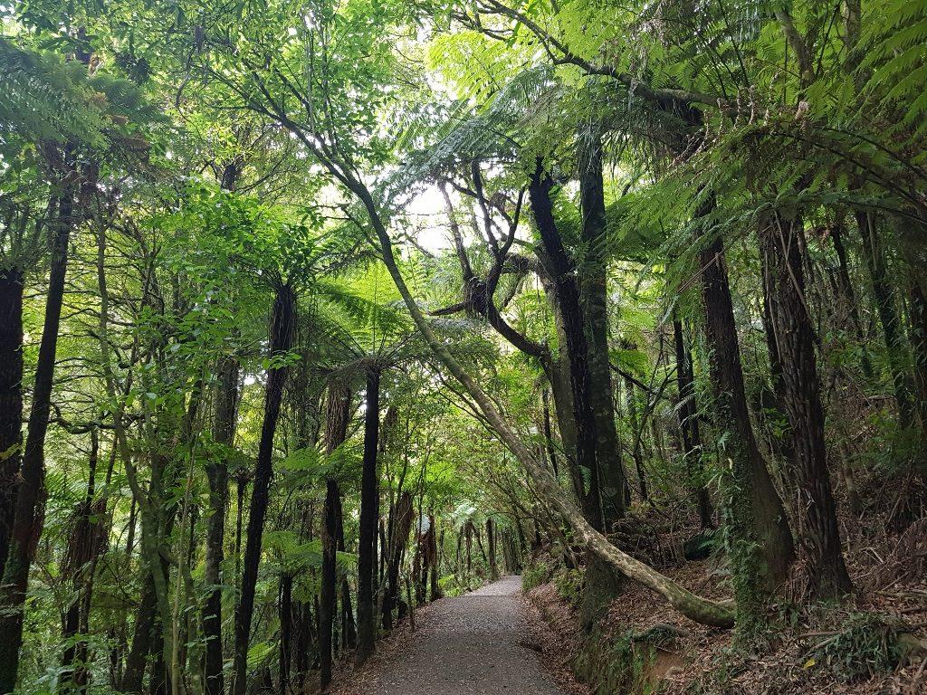 ニュージーランド ワイカト ラグラン 花嫁のベール滝