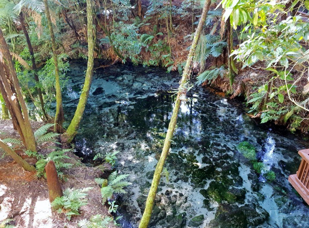 ロトルア ハムラナスプリングス 泉