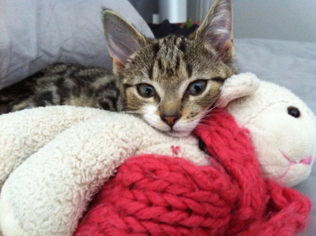海外生活と猫