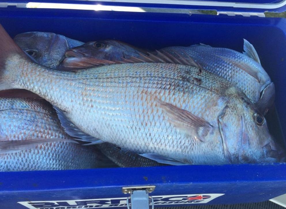 ニュージーランド魚釣り